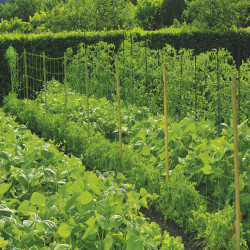 Мрежа за краставици Nortene 1.7 x 5 м. 120247 - Аксесоари за градина