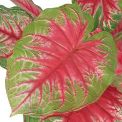 Sonata Изкуствено растение каладиум със саксия, 70см, зелено и червено - Изкуствени цветя