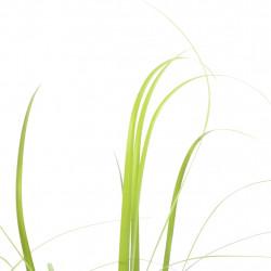 Sonata Изкуствена трева, зелена, 55 см - Изкуствени цветя