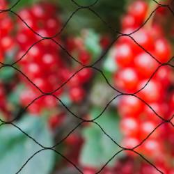 "Nature Мрежа срещу птици ""Primo"", 10х4 м, черна, 6030406 - Аксесоари за градината"
