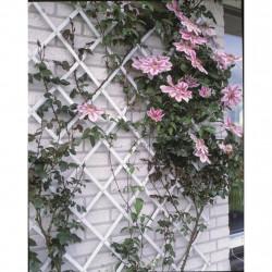 Nature Градинска пергола, 50x150 см, PVC, бяла, 6040701 - Външни Структури