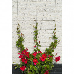 Nature Телен комплект за увивни растения 6040760 - Аксесоари за градината